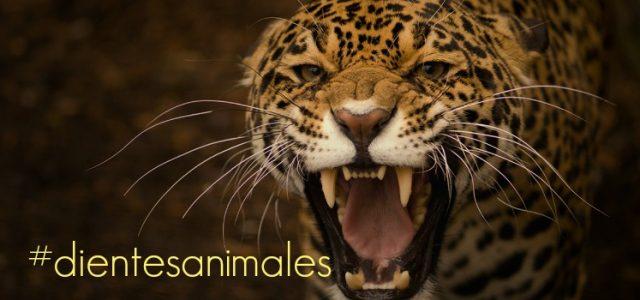 animales dientes puntiagudos