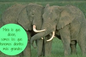 dientes de animales carnivoros y herbivoros