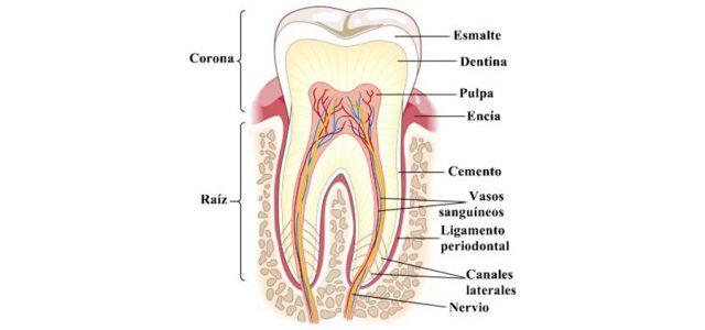 Qué causa la anquilosis dental